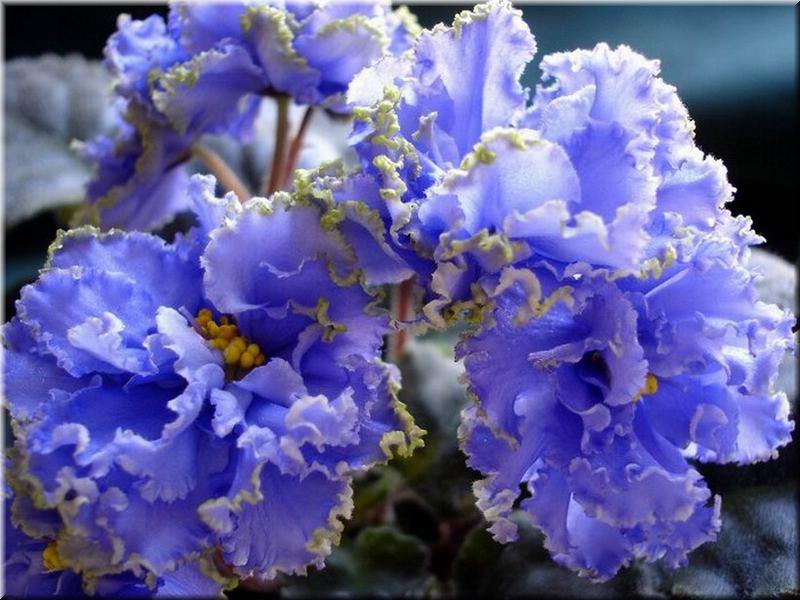 http://violet-nju-spb.narod.ru/ruffled_skies.jpg